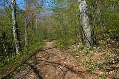 Sentier des Grottes @ Forêt @ Mont Veyrier