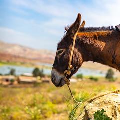 A nice donkey