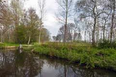 Steinse Groen - Haastrecht - Zuid-Holland - NL