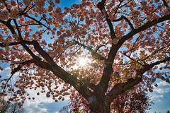 Photo of Spring Sunshine
