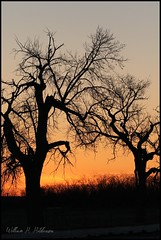 April 18, 2021 - Silhouetted tree with owls. (Bill Hutchinson)