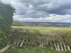 Photo of Whitehill