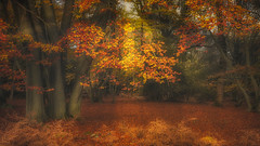 Photo of Epping Forest Autumn Colours