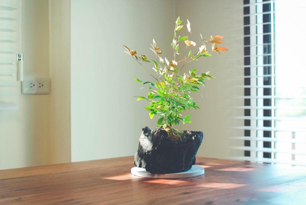 附件4. 誠品生活expo l 愛護地球也可以很簡單,在家裡或辦公空間種植物也是修復地球的行動!獨特的「炭盆栽」將植栽結合台灣龍眼炭,採用回收林木再創價值。