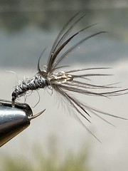 Photo of Magpie & Oxford Spindrift