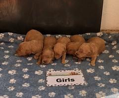 Belle Girls 4-23
