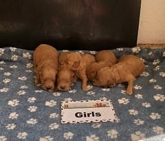 Belle Girls pic 3 4-23