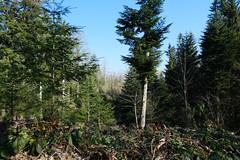 Bois de Bessonnet