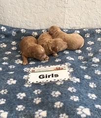 Cindy Girls pic 3 4-23