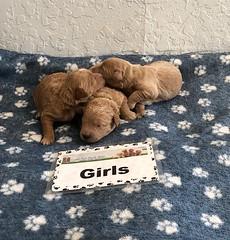 Cindy Girls 4-23