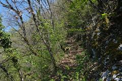 Forêt @ Sous le Mont Baret