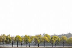Allee mit Kastanienbäumen im Akademiepark