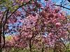 Beautiful Blossom And Blue Sky...