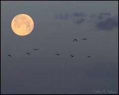 April 27, 2021 - A gorgeous full moon setting. (Bill Hutchinson)
