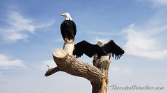 April 24, 2021 - Bald eagle statue in Adams County. (ThorntonWeather.com)