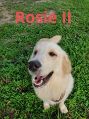 Rosie II