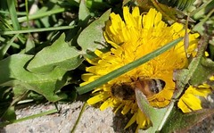 April 23, 2021 - Bee getting busy. ( (Le Worley)