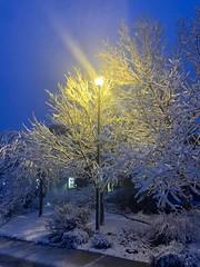 April 21, 2021 - Beautiful snowy scene. (Heidi Armstrong Khoury)