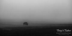 April 24, 2021 - Foggy start to the day. (Tony's Takes)
