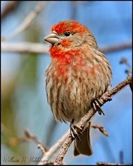 April 23, 2021 - Pretty bird. (Bill Hutchinson)