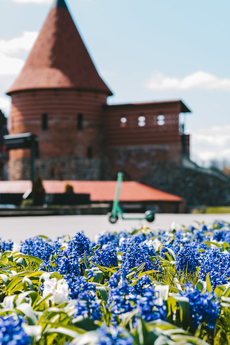 City flowers | Kaunas