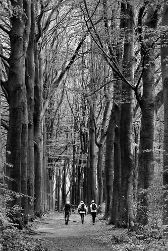 three of a kind in the trees