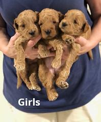 Noel Girls pic 2 4-29