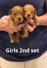 Belle Girls 2nd set pic 2 4-29