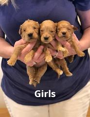 Belle Girls pic 4 4-29