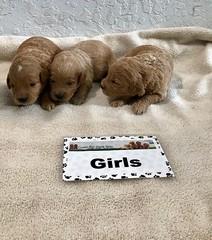 Cindy Girls pic 2 4-29
