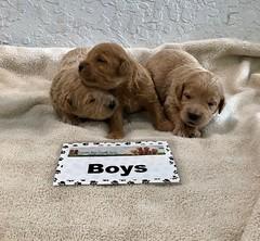 Cindy Boys pic 4 4-29