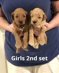 Noel Girls 2nd set pic 3 4-29