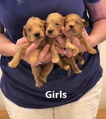 Belle Girls pic 3 4-29