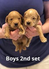 Belle Boys 2nd set pic 4 4-29