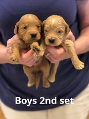 Belle Boys 2nd set pic 2 4-29