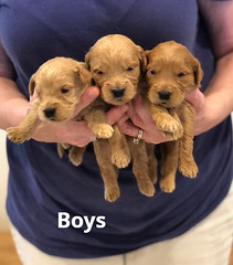 Belle Boys pic 4 4-29