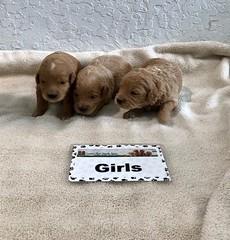 Cindy Girls pic 4 4-29