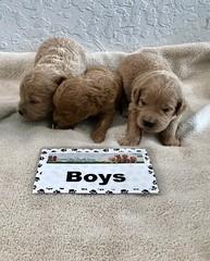 Cindy Boys pic 2 4-29