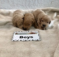 Cindy Boys pic 3 4-29