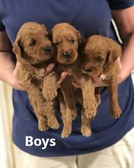 Noel Boys pic 3 4-29