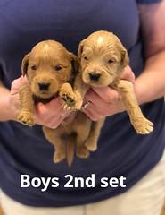 Belle Boys 2nd set 4-29