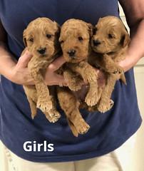 Noel Girls pic 4 4-29