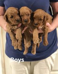 Noel Boys 4-29