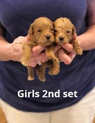 Belle Girls 2nd set pic 3 4-29