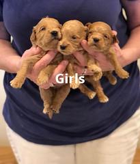 Belle Girls pic 2 4-29