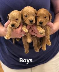 Belle Boys pic 2 4-29