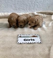Cindy Girls pic 3 4-29