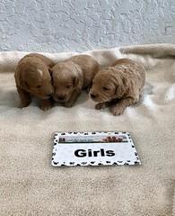 Cindy Girls 4-29