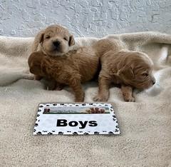 Cindy Boys 4-29