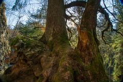 Bauminsel am Strahlbruschwasserfall